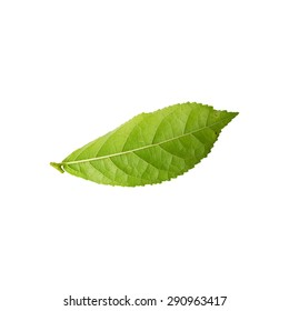 Green leaf isolated on white background , nature leaf