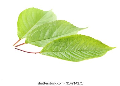 Green leaf isolated on a white