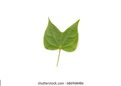 green leaf isolated on white background closeup