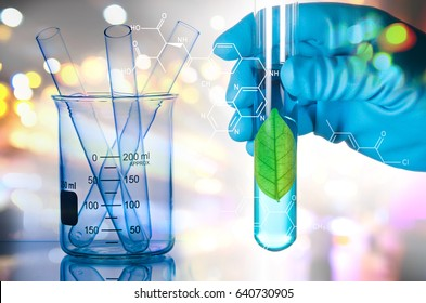 green leaf in laboratory test tube in scientist hand isolated on white background , biotechnology concept