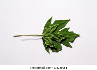 Green leaf / Leaves are often dried to use as decorations in craft projects, or to preserve herbs for use in cooking.