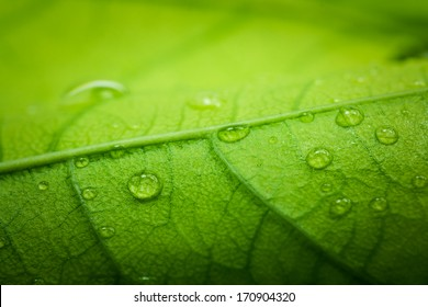 Green leaf macro with water drops
