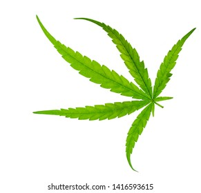 Green leaf of marijuana on white background