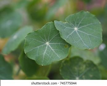 green leaf morning