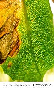 green leaf mosaic texture