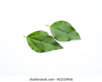 Green leaf motifs for use in art work, leaves from the tree, white background