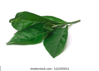 Green leaf nan fui chao is medicinal herbs isolate on white