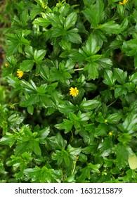 Green Leaf natural background pattern