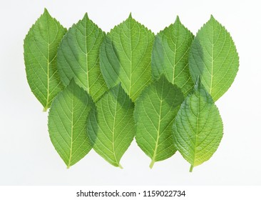 green leaf nature
