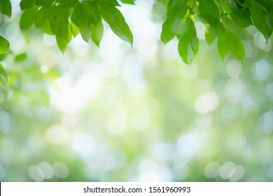 Green leaf nature on blurred greenery background. Beautiful leaf texture in sunlight. Natural background. close-up of macro with copy space for text.