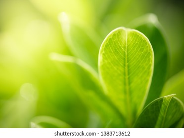 Green leaf nature i for wallpaper and background, Yellow color with copy space using as background natural green plants landscape