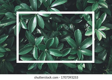 Green leaf nature with white text box for presentation background or texture - natural or environment concept.