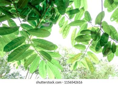 green leaf on background natural