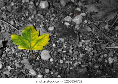 Green Leaf on a Black and White Background
