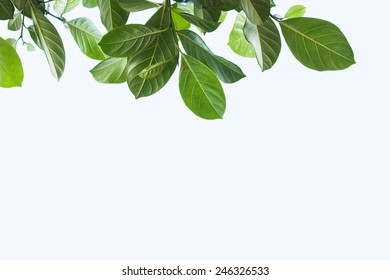 green leaf on blue and green background