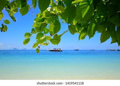 Green leaf on blue sea background
