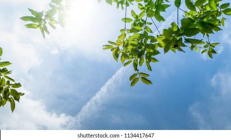 green leaf on blue sky background,backdrop nature