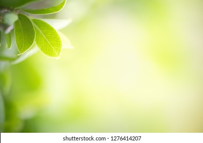 Green leaf on blurred greenery background in garden with copy space for text or your product using as background natural green plants landscape, ecology, fresh wallpaper concept
