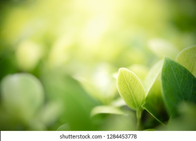 Green leaf on blurred greenery background in garden with copy space for text or your product using as background natural green plants landscape, ecology, fresh wallpaper concept.