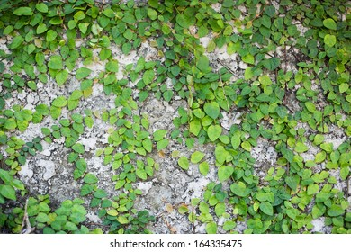 green leaf on concrete wall