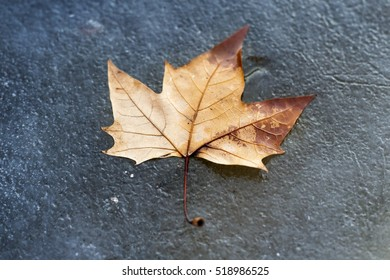 A green leaf on frozen water.
