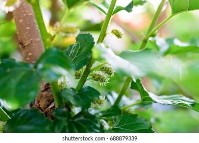 green leaf on natural light