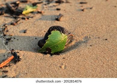 Green leaf on the stone on a beach sand. High quality photo