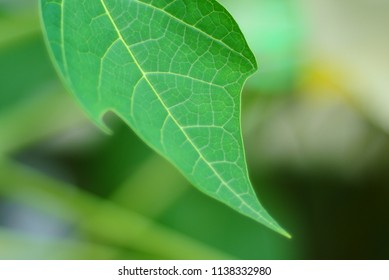 green leaf on the tree