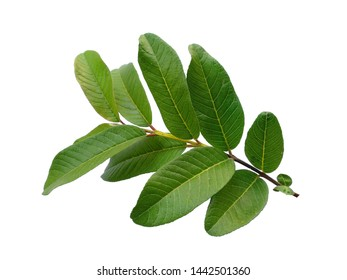 Tree Leaves with Name Images, Stock Photos & Vectors | Shutterstock