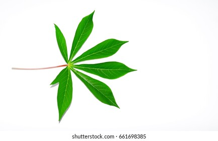 the green leaf on white background