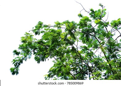 Green leaf on white background or tree isolated use for tree background