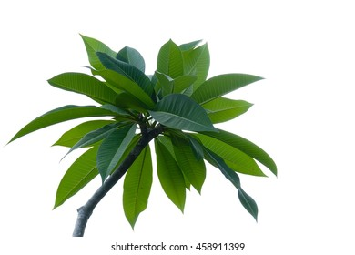 Green leaf on white sky background,select focus with shallow depth of field:ideal use for background