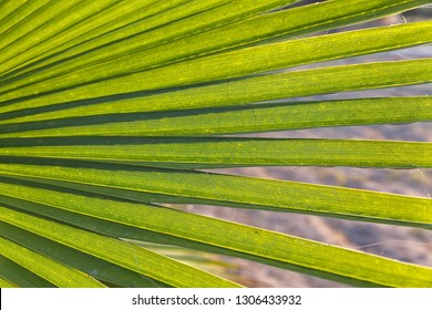 Green leaf of palm tree on white sand background