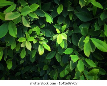 Green leaf pattern background.