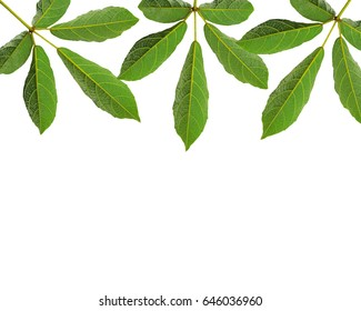 Green leaf pattern frame on a white background.