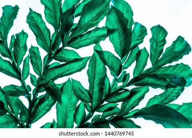green leaf pattern on with background, dark tone