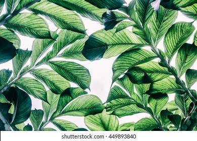 Green leaf pattern on the surface - Shutterstock ID 449893840