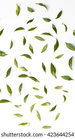 Green leaf pattern with a white background, flat, top view.