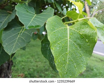 Green leaf Pho leaf, (bo leaf) ิbo is a leaf representing Buddhism.
