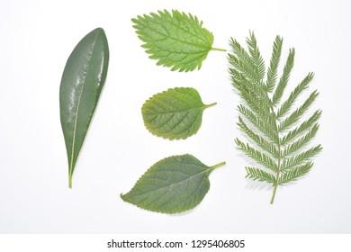 green leaf of plant botany nature forest