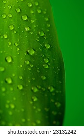 Green leaf of plant with drops