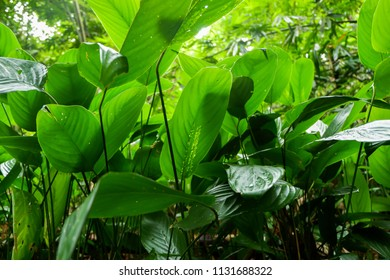 green leaf plant in forest