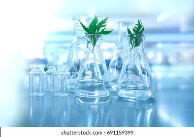 green leaf plant with glassware flask and vial in biotechnology science laboratory background
