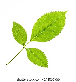 Green leaf of a plant on white background