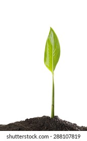 Green Leaf and Plant Sprout Growing on Dirt. Concept for Ecology and Conservation