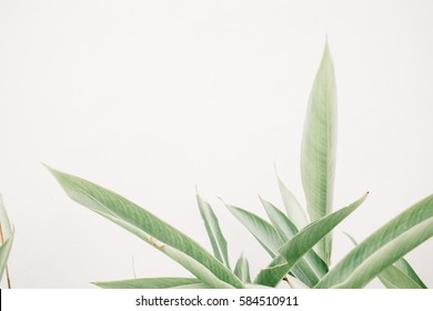 Green leaf plants near beige wall. Minimalistic floral background.