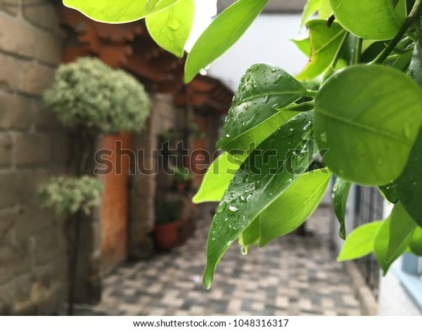 Fine Green Leaf Rainy Day Inside House Stock Photo Edit Now Download Free Architecture Designs Scobabritishbridgeorg