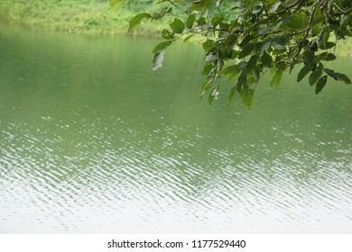 Green leaf and reflection of waves with   green surface of river