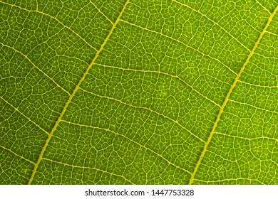 Green leaf seamless texture. Detail close image leaf macro seamless texture pattern. Macro close-up of leaf, Green leaf background texture. nature save concept