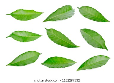 Green leaf set isolated on white background